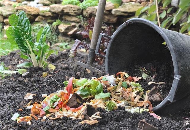 compost fertilizer