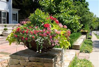 Flowerpot on Stone Wall