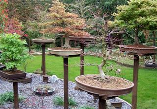Image of bonsai
