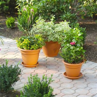 Walkway flowerpots