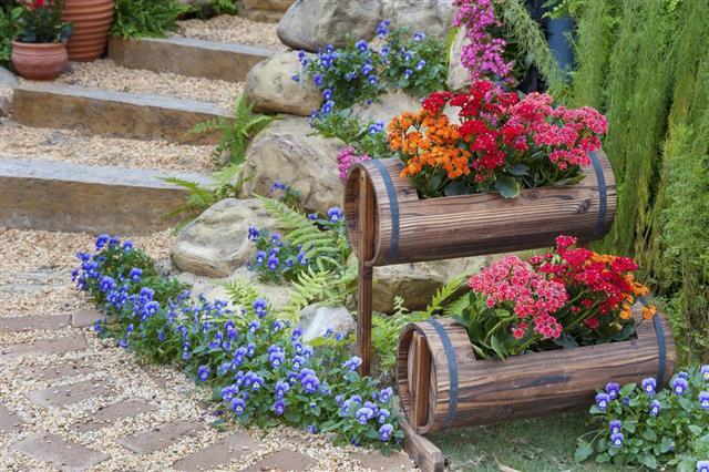 flower plant in garden