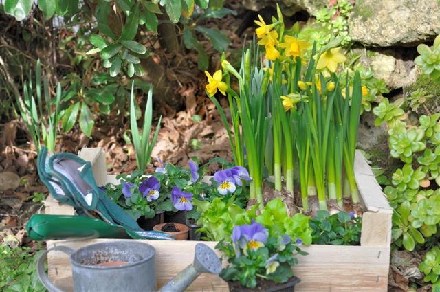 plant gardening