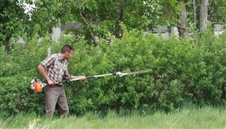 Trimming A Caragana Hedge