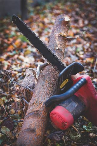 Chainsaw In The Garden