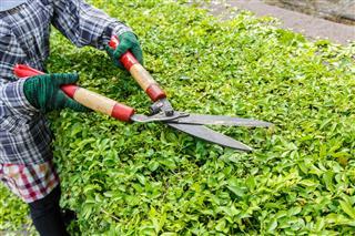 Gardener Worker Trimming Plants