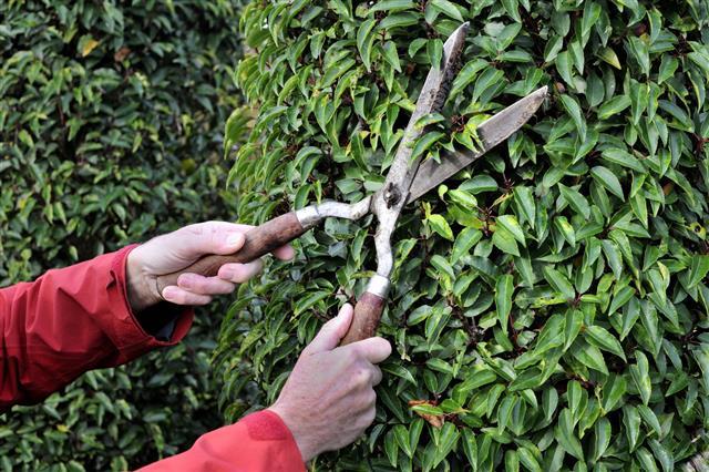 Manual Hedge Trimming