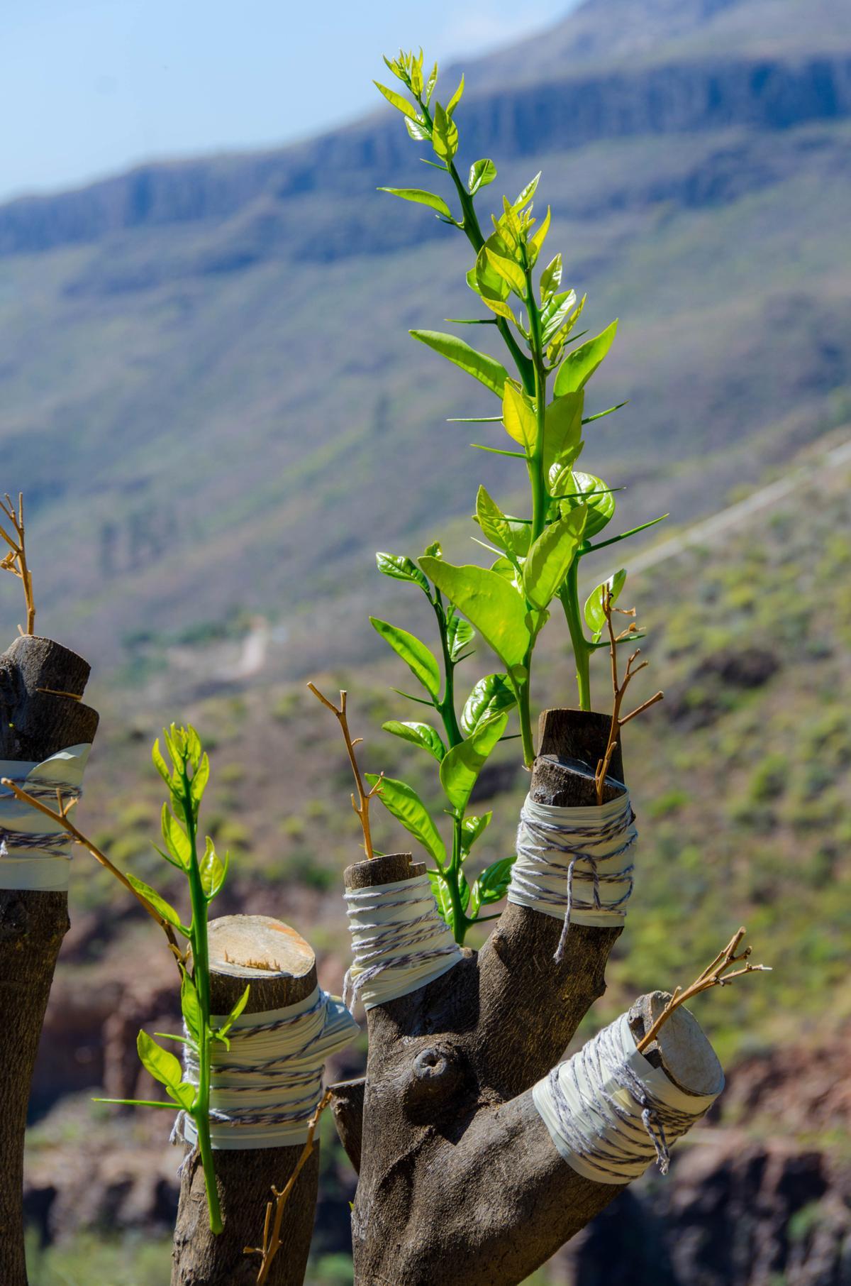 These Amazing Sahara Desert Plants Are Masters At Adaptation