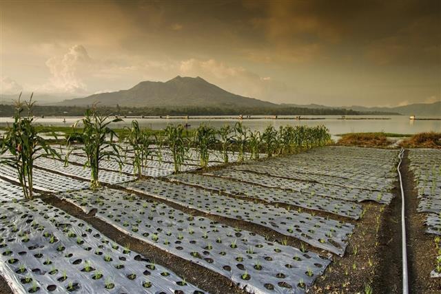 Organic farming in Bali
