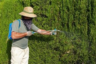 Gardener Spraying Pesticide