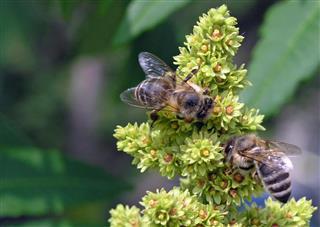 Bees at work!