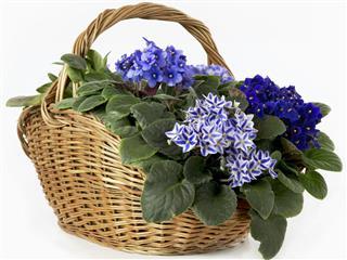 Bluish violet basket