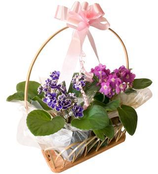 African violet basket gift
