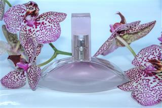 Perfume bottle gift