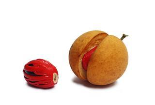 Nutmeg Seeds From Kerala