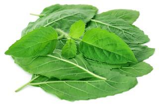 Medicinal Basil