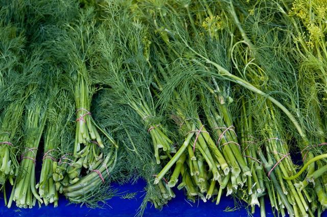 Fresh Dill At Market