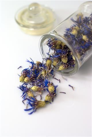 Dried Cornflower In A Glass
