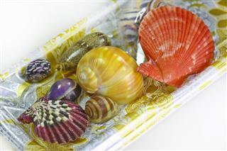 Small Collection Of Seashells
