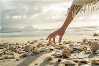 Seashells At Beach