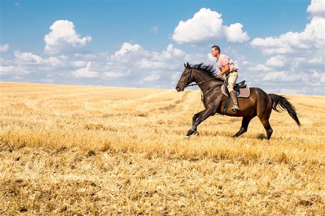 Man Ride Horse On Field