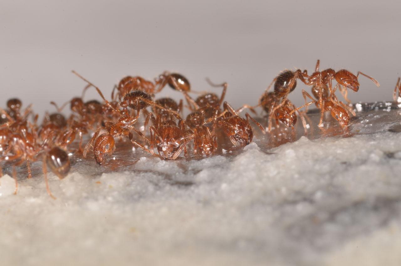 Getting Rid of Ants in Vegetable Garden