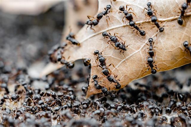 Ants Battle Macro