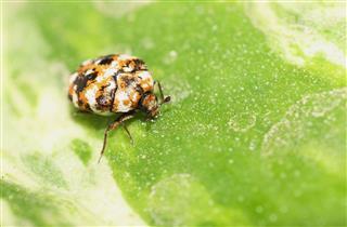 Special Ladybug