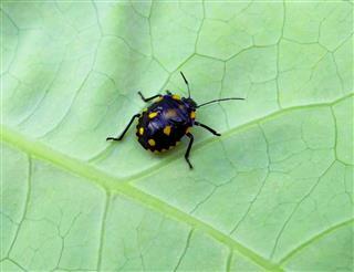 Beautiful Ladybug