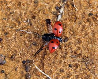 Ladybug Take Off