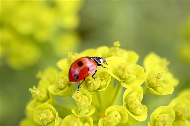 Ladybug On Flowers