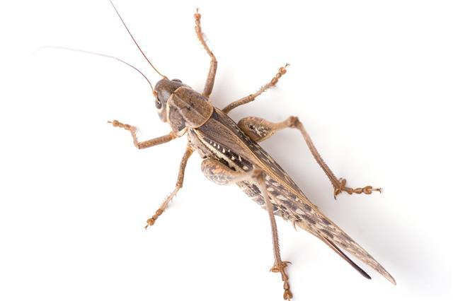 Grasshopper Top View