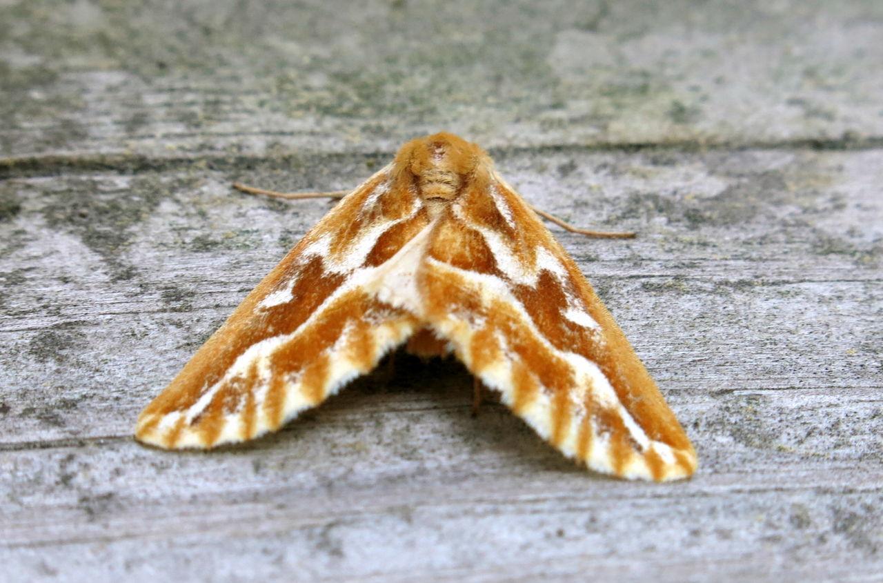 Natural Moth Repellent Recipes