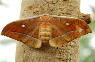 Wild Moth
