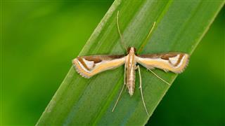 Macro Photo Of Wide Winged Moth