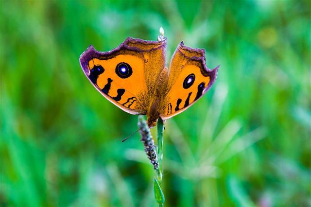 Moth On Grasses