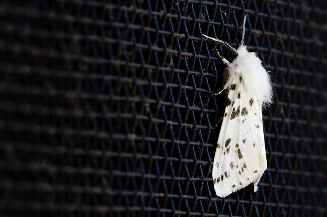 Moth Macro