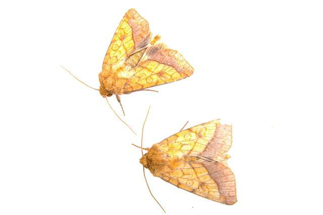 Two Moths