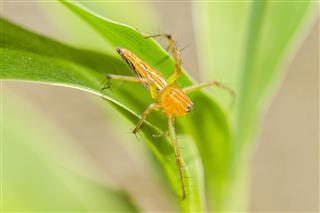 Long Leg Spider On Leaves