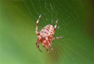 Arachnophobia Summer Spider