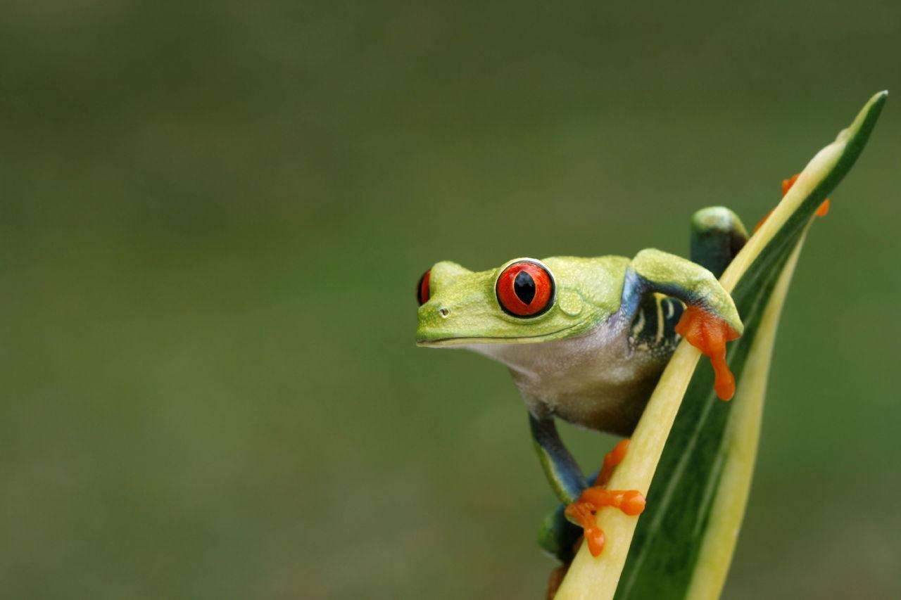 Amphibians vs Reptiles