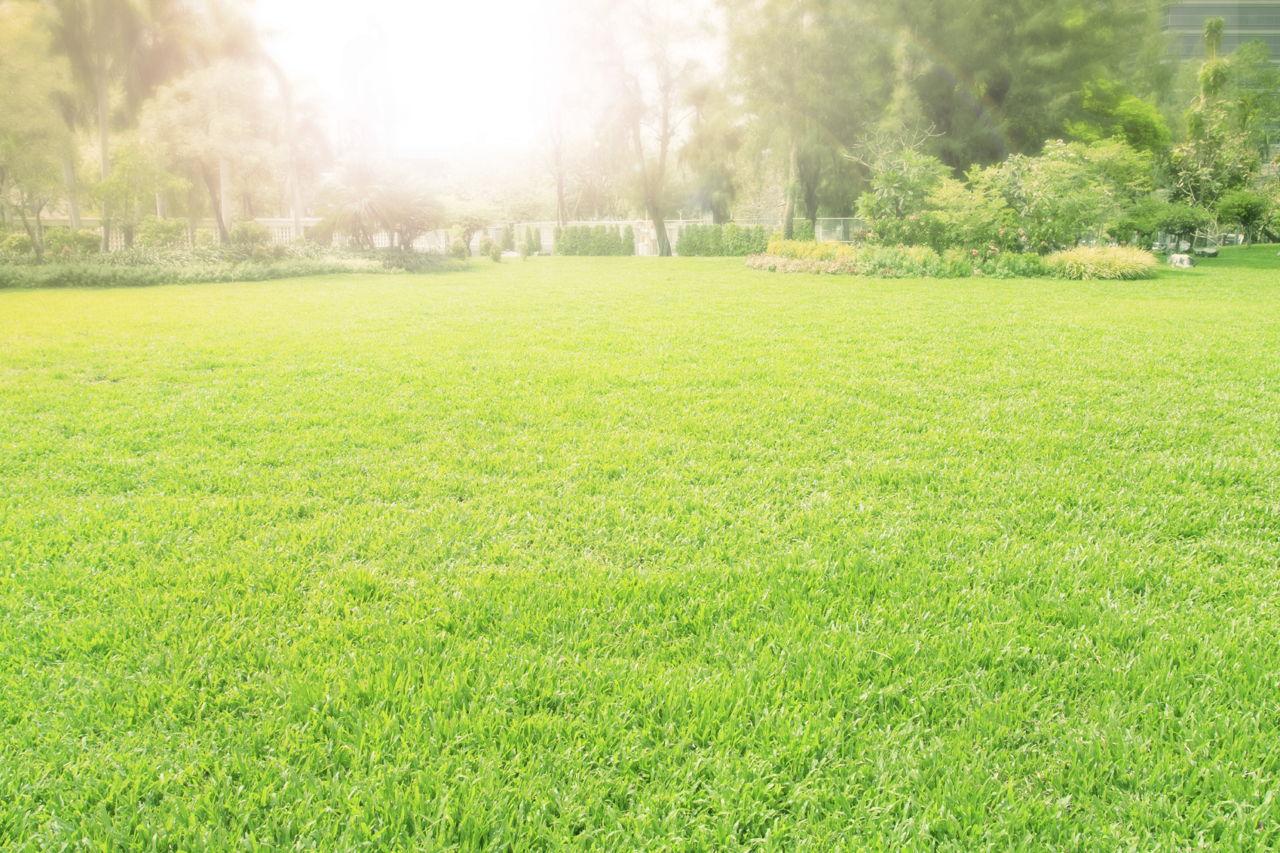 Grass Allergy Rash
