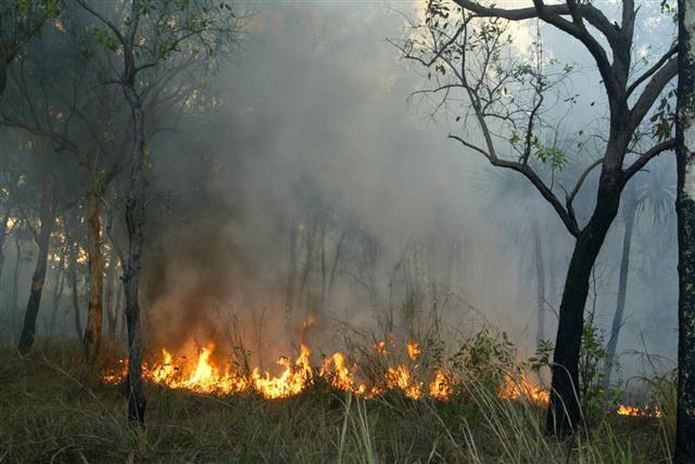 Bush Fires In Central Australia