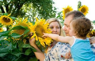 Family in sunflower farm