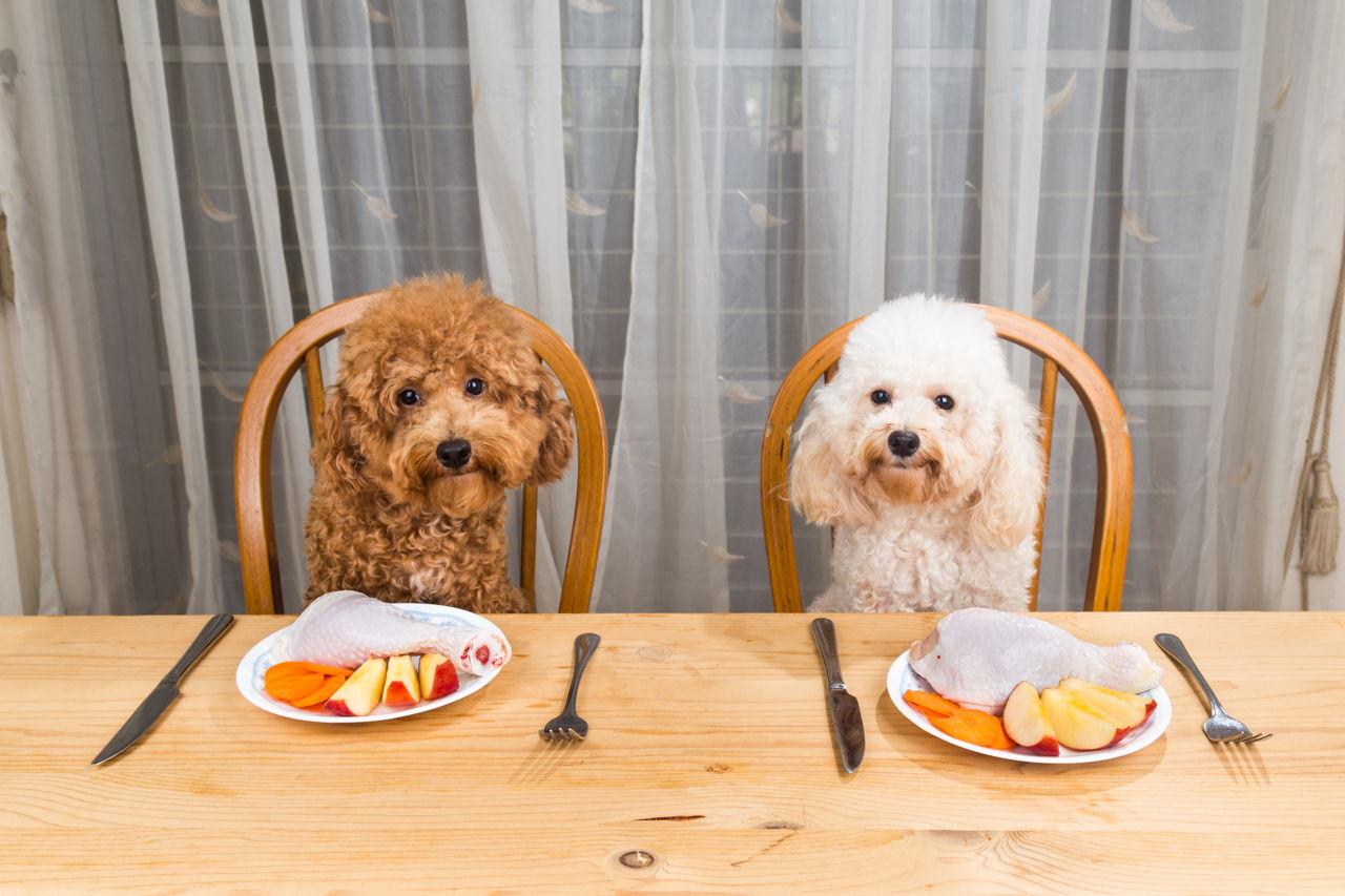 Purines Dog Food