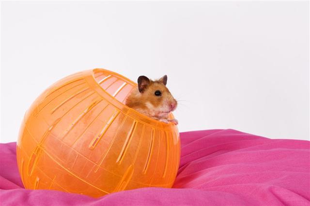 Hamster And His Ball