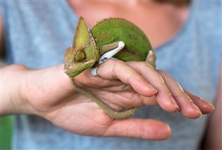 Woman Holding Chameleon