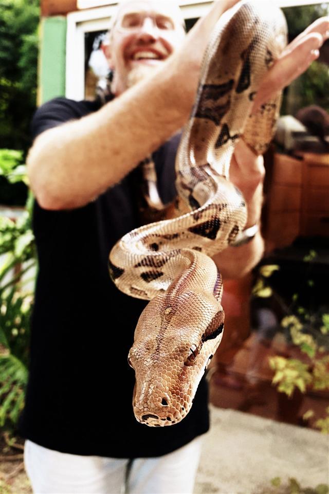 Burmese Python Held By Man