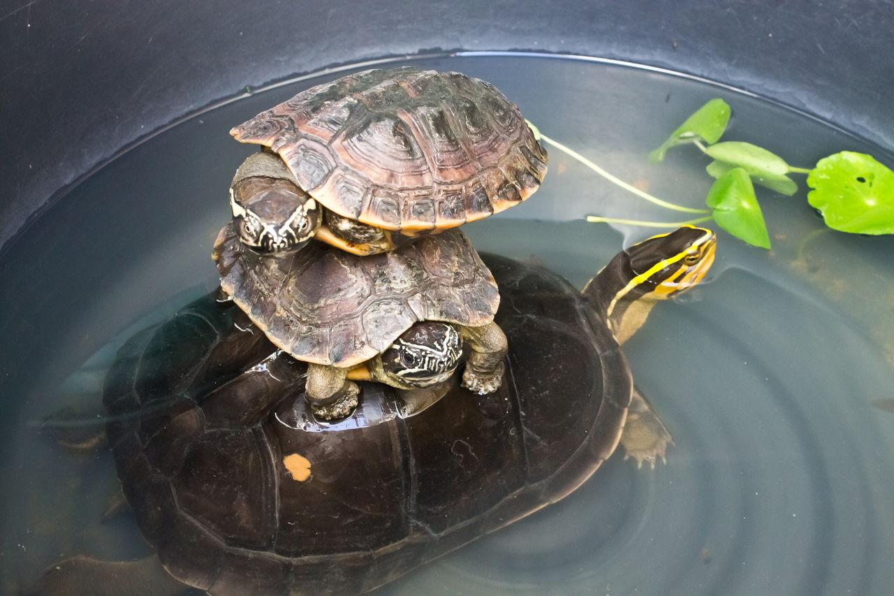 What Do Turtles Eat Pet Ponder