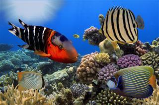 Corals And Tropica In Aquarium