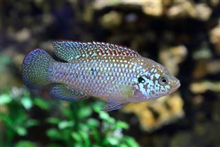 Fish Floats Against Stones